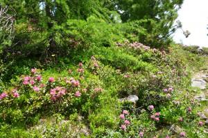Místní květena